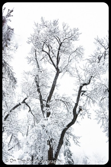 LD-Gerald-Snow-0051-2020-04-16