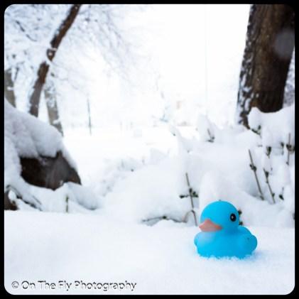 LD-Gerald-Snow-0054-2020-04-16
