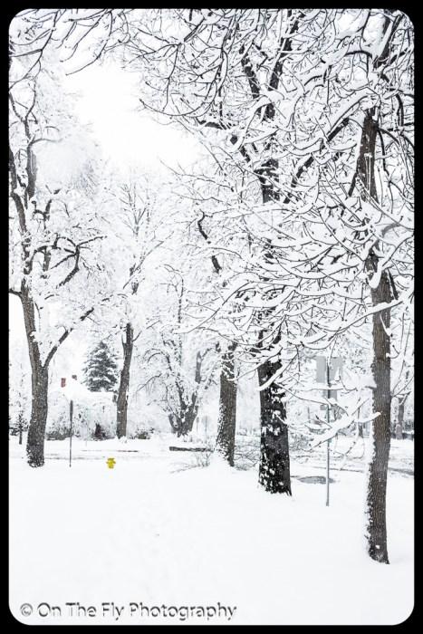 LD-Gerald-Snow-0056-2020-04-16