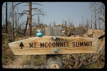 Mt-McConnel-0046-2020-08-17