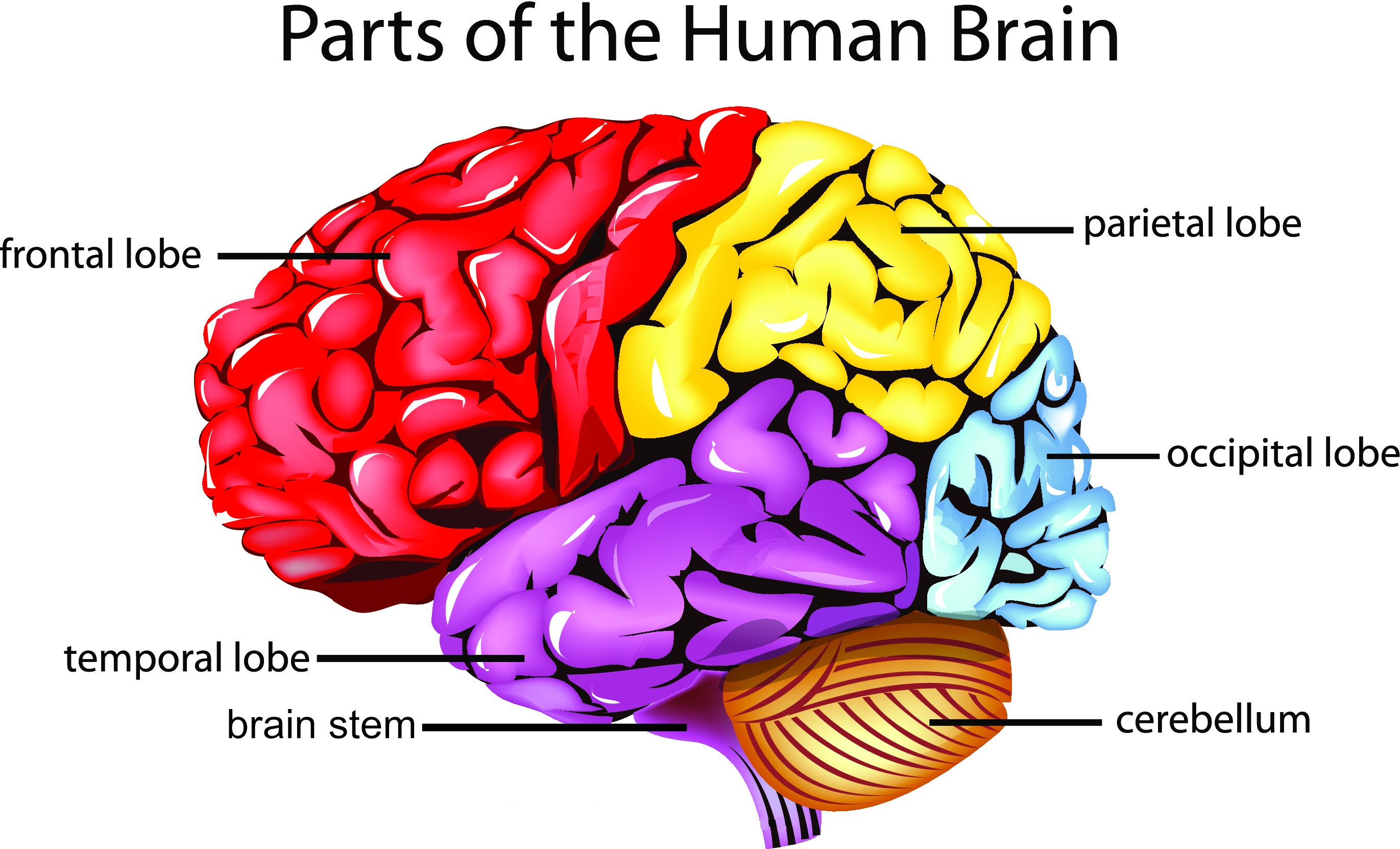 Take This Brain Quiz And Test Your Knowledge