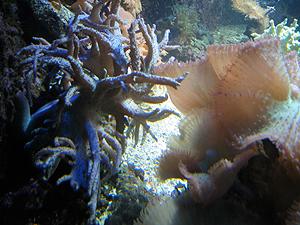aquarium_2.jpg