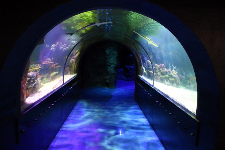 A photo of Shreveport Aquarium