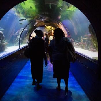 A photo of Shreveport Aquarium