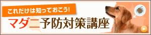 content-m-shiawase-cp-2