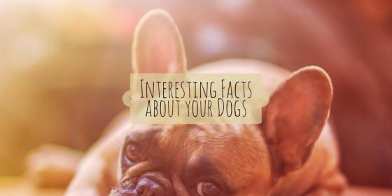 Interesting Facts about your Dogs