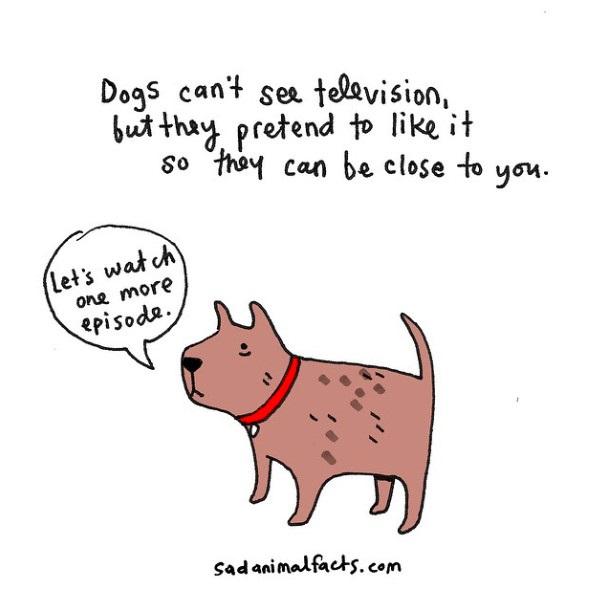 """狗狗无法收看电视画面,不过为了亲近你,它们假装自己喜欢看电视。 """"我们再看一集吧!"""""""