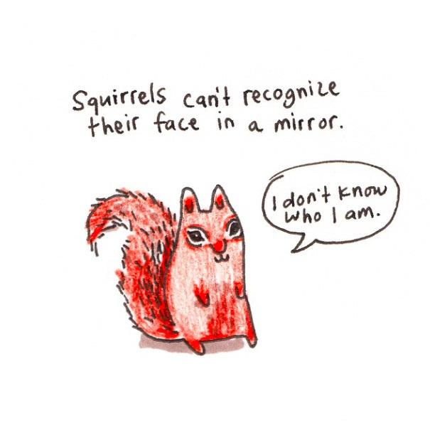 """照镜子时,松鼠认不出自己的脸。 """"我不知道我长啥样。"""""""