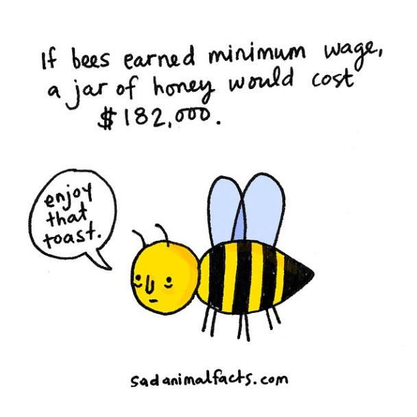 """如果给蜜蜂发最低薪水,一瓶蜂蜜可能会价值18.2万美元。 """"享受那片吐司吧。"""""""