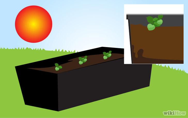 以Grow Strawberries Step 38为标题的图片