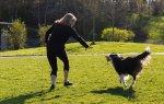 寻找长寿药方,科学家拿狗做试验