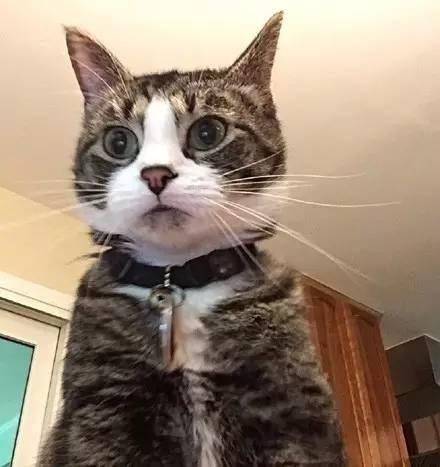 主人把电脑设置为3次登陆密码错误就会自动拍照,结果...