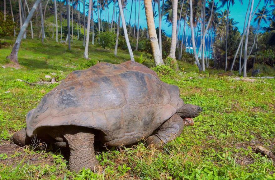 fregate-conservation-tortoises2