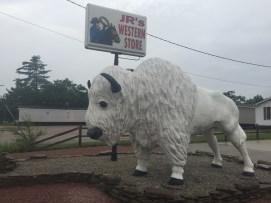 Never seen a white buffalo.