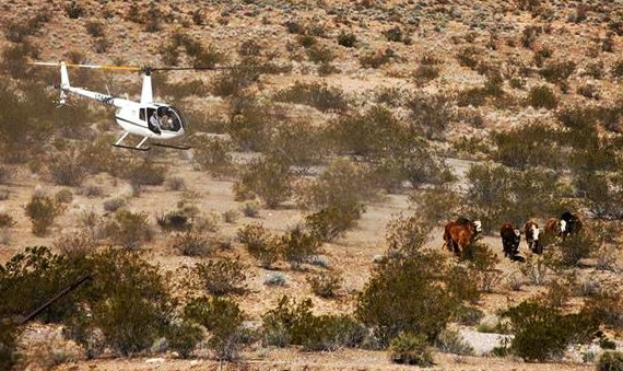 Evidence of BLM's Deadly Abuse of Animals Taken from Bundy Ranch