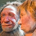 NO SALAD PLEASE: Study Reveals Neanderthal Paleo Diet Was 80% Meat, 20% Veg