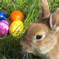 """Foster Parents LOSE Children, Refuse to Call Easter Bunny """"Real Entity"""""""