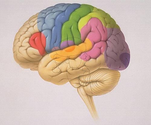 Do poloviny 21. století se až 40 % obyvatel vyspělých zemí dožije věku 80 – 100 let. Takovou naději nám dávají nejnovější hypotézy vědců - optimistů. Jiní odborníci však dodávají: Předpokladem je úspěšné léčení Alzheimerovy choroby i jiných postižení mozku.