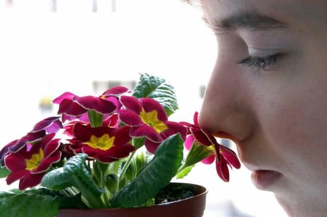 Smysly jsou prostředkem, pomocí kterého vnímáme své okolí. Pět samostatných smyslových systémů reaguje na různé podněty: oči umožňují interpretovat zrakové informace, sluch zprostředkovává zvuk a udržuje rovnováhu, nos a jazyk reagují na pachy a chutě a smyslové nervy v kůži umožňuji cítit fyzický kontakt, změny v teplotě a bolest. Podívejme se jak si dokáže moderní věda poradit při jejich poruše, či úplné ztrátě.