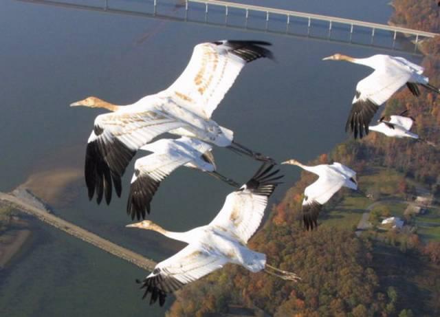 Ornitologové dnes vidí ve změnách denního světla a postupném zkracování dnů hlavní příčinu, která nutí stěhovavé ptáky ke složitému cestování, často i tisíce kilometrů vzdálená stanoviště. I tato teorie má však své odpůrce a další názory jsou s ní v hlubokém rozporu. Podívejme se tedy, jak se současná věda k problematice stěhovavých ptáků staví.