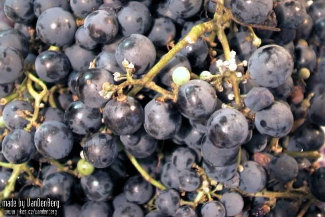 Může za to oteplování? Gregory Jones, klimatolog z Southern Oregon University v Ashlandu, analyzoval efekt současných klimatických změn na kvalitu vína v 27 předních vinařských oblastech světa.