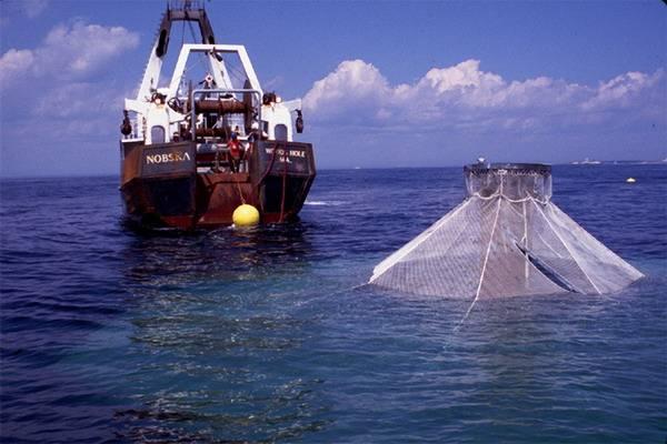 Jednou z cest, jak zabránit plenění rybí populace ve světových oceánech, je pěstování některých druhů ryb a měkkýšů na jakýchsi »rybích farmách«, umístěných daleko od pobřeží.