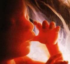 Odborníci z univerzity v Southamptonu v těchto dnech zveřejnili první rozsáhlou studii, která se věnuje vlivům nevhodné stravy v průběhu těhotenství na zdraví dítěte.