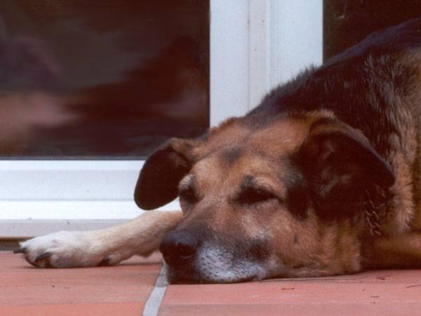 Američtí odborníci tvrdí, že by si vlastníci psů měli vybírat své čtyřnohé mazlíčky tak, aby měli stejnou povahu jako oni. Proto nyní vytvořili test, který chovatelům prozradí, jaký charakter má jejich zvíře.