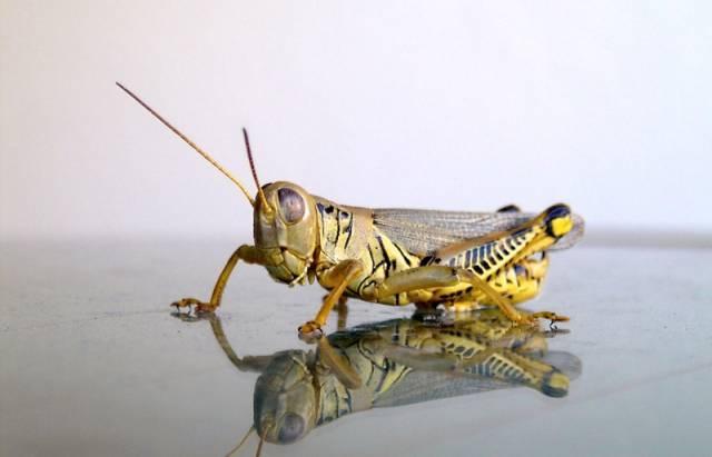 Německo-americký vědecký tým v těchto dnech rozluštil záhadu fungování hmyzího respiračního ústrojí, která trápila odborníky mnoho desítek let.
