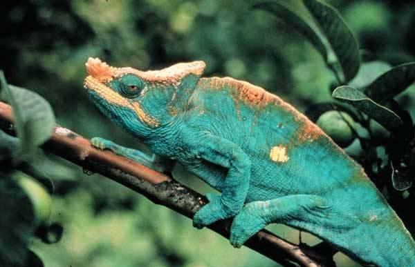 Každý by jistě mohl z vlastní zkušenosti uvést mnohé příklady přirozeného přírodního maskování zvířat, ale některé maskovací triky dokáží i zkušeným odborníkům vyrazit dech. Svědčí o tom i nejnovější poznatky, které se redakci 21. STOLETÍ podařilo získat.