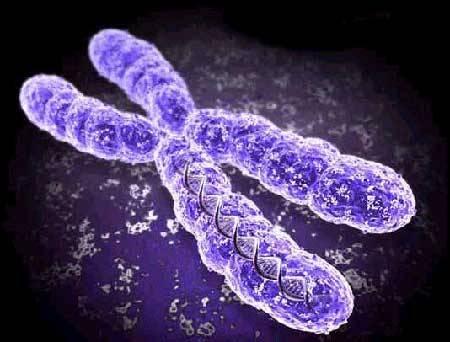 Britští odborníci nyní rozluštili ženský chromozom X. Z jejich rozsáhlé studie vyplývá, že ženy jsou z hlediska genetiky mnohem rozmanitější než muži!
