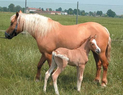 Již druhý naklonovaný kůň se narodil v italské Cremoně. Oznámili to tamní experti s tím, že zvíře přišlo na svět 25. února letošního roku.