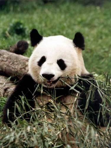 V důsledku přirozených procesů a především negativní činnosti člověka vymírají každoročně po celém světě tisíce živočichů a rostlin. Nemíří snad do Červené knihy ohrožených druhů i člověk?