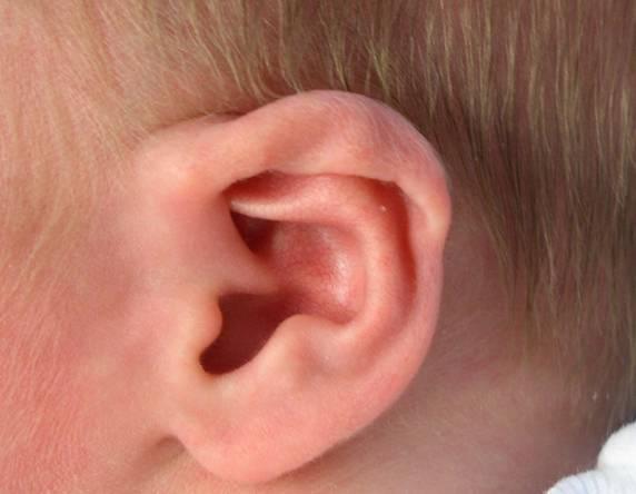 K identifikaci osob by v budoucnosti kromě otisků prstů nebo snímání oční sítnice mohlo posloužit i lidské ucho!