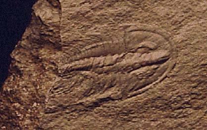 Američtí a čínští vědci si nyní lámou hlavu nad nálezem fosílie podivného tvora, který podle všeho nezapadá do žádné známé skupiny živočichů.