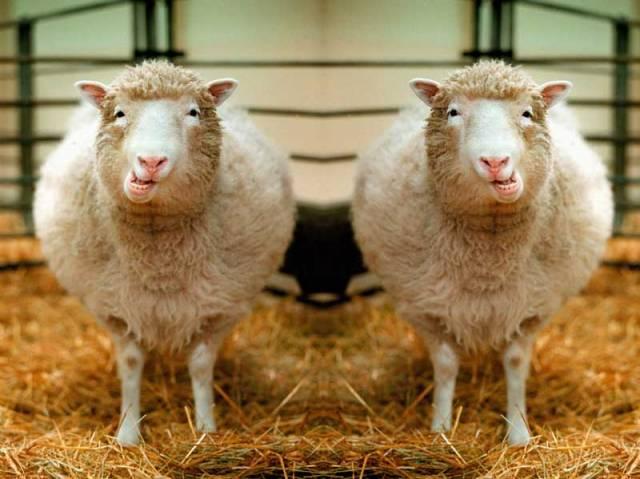 Problémy spojené s klonováním živých tvorů vytvořily od začátku dva nesmiřitelné tábory - nadšených příznivců hlavně z řad lékařů a zatvrzelých odpůrců, zejména těch nábožensky založených. Čím argumentují?