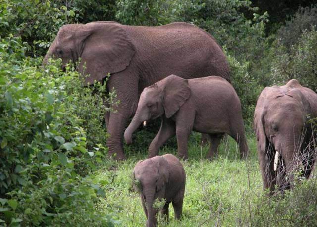 Nejen člověk oplakává své zesnulé. Podle posledních výzkumů se zdá, že i sloni dokážou truchlit nad svými zemřelými kamarády.