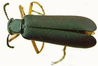 Nejpočetnějším řádem hmyzu jsou brouci - každý třetí ze současně žijících hmyzích druhů je brouk.