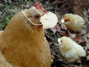 Světová zdravotnická organizace (WHO) obvinila Čínu, že nechce dodat vzorky viru ptačí chřipky.