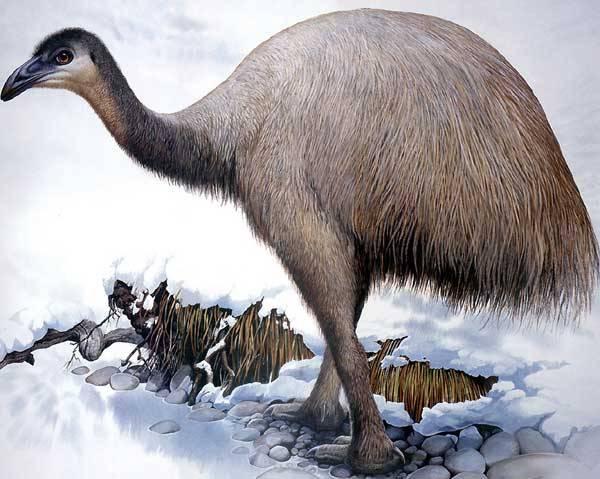 Záhadu jednoho z nejrychlejších vymření živočišného druhu v historii naší planety, která dlouhá léta trápila nejednoho paleontologa, nedávno rozluštili britští odborníci z Institutu zoologie v Londýně.