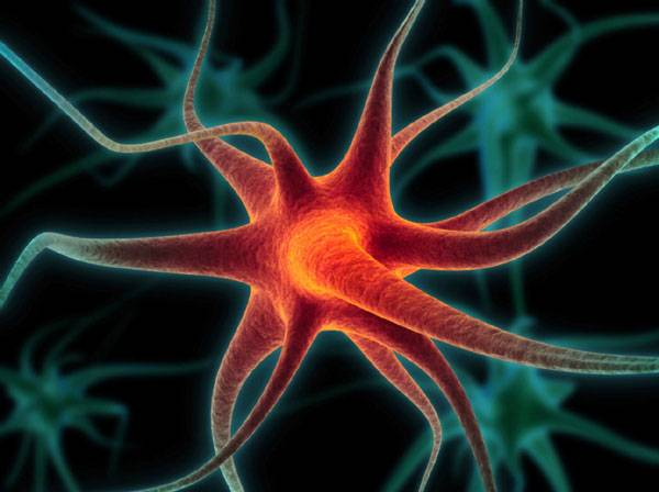 Do nedávné doby se vědci domnívali, že nervový a imunitní systém fungují odděleně, jsou navzájem nezávislé, funkčně a biochemicky odlišné. To však už nyní přestává platit! Zásluhu na tom má využití nových technologií v molekulárním zobrazování a v genetice.