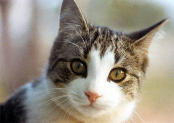 Když si rodina pořídí štěně, kotě či jiné domácí zvíře, dříve či později bude postavena před problém: kastrovat či nechat zvíře v přirozeném stavu? 21. STOLETÍ se na tuto problematiku podívalo z obou stran.