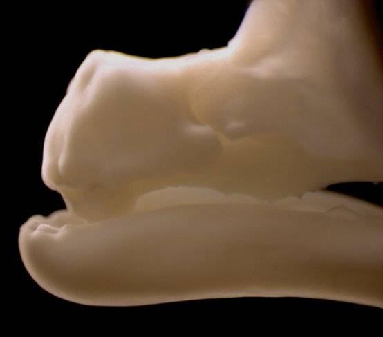 Stačí drobná úprava genů a i obyčejná slepice si vzpomene, co její předci nosili před 80 miliony let.