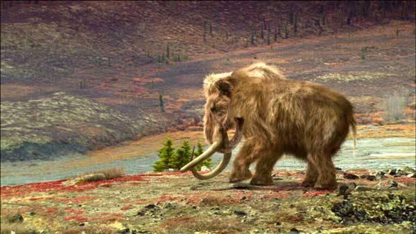 Genetici čtou DNA mamuta! Podaří se naklonovat pravěké zvíře? Týmu Michaela Hofreitera z Max Planck Institute for Evolutionary Anthropology v Lipsku se podařilo z pouhých 200 mg tkáně odebrané z kostí mamuta, nalezeného v ledu v povodí sibiřské řeky Kolymy, vydolovat úsek genetické informace dlouhý 5000 písmen.