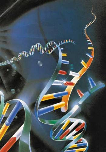 Světem stále otřásá skandál kolem podvodů v korejském výzkumu klonování. Dva roky jsme si mysleli, že jsme v oblasti přípravy lidských embryonálních kmenových buněk mnohem dál, než tomu ve skutečnosti bylo.