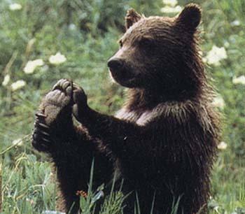 Francouzští farmáři se proslavili zejména sypáním ovoce a zeleniny před budovy vládních úřadů na protest proti krácení svých dotací. Nyní se jim znelíbila jiná věc, a to vypouštění medvědů do oblasti Pyrenejí.