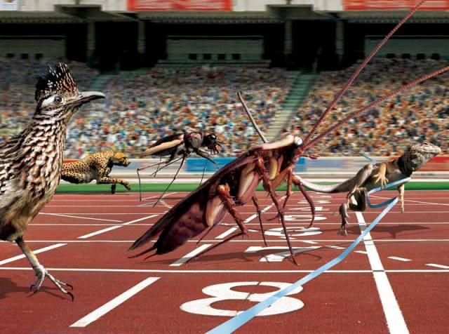 V kategorii sprintérů má člověk mezi zvířaty obrovské množství konkurentů. Nejrychlejší lidský závodník dosáhne ve sprinterském závodě pouhých 36 km/hod.
