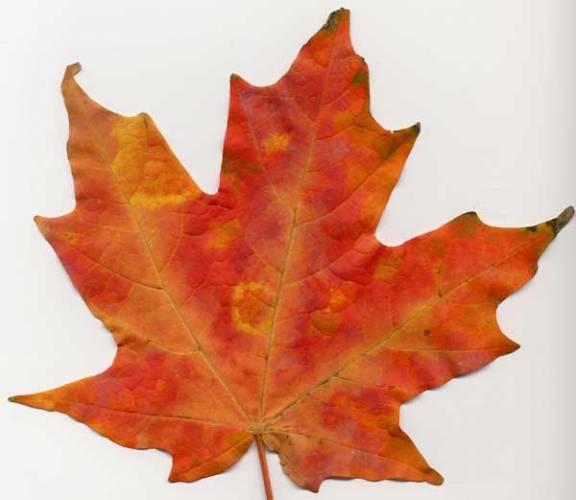 Odpověď na otázku proč jsou rostliny zelené je celkem jednoznačná. Obsahují chlorofyl, který jim dodává zelenou barvu. Proč jsou ale jejich květy fialové, rudé, či žluté? Proč září bohatými barvami na podzim? Na tyto otázky společně budeme hledat odpovědi.