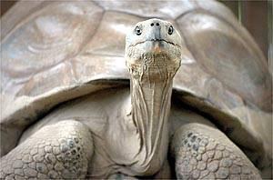 Minulý pátek skončil rekordní život Harriet, želvy, která pamatovala Darwina.