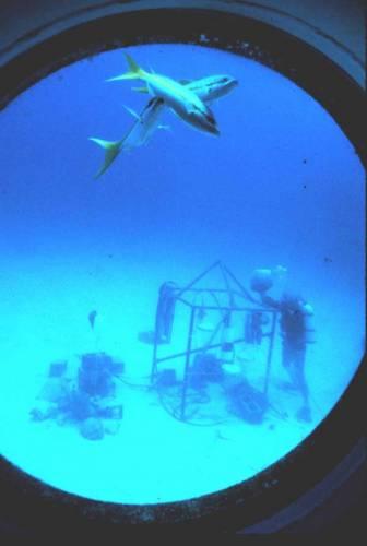 O mezinárodní kosmické stanici ISS slyšel asi každý, ne každý ale ví, že má svůj protějšek pod hladinou moře. Několik kilometrů od floridského pobřeží spočívá na dně moře laboratoř Aquarius, v současnosti jediné trvalé lidské obydlí v mokrém živlu.